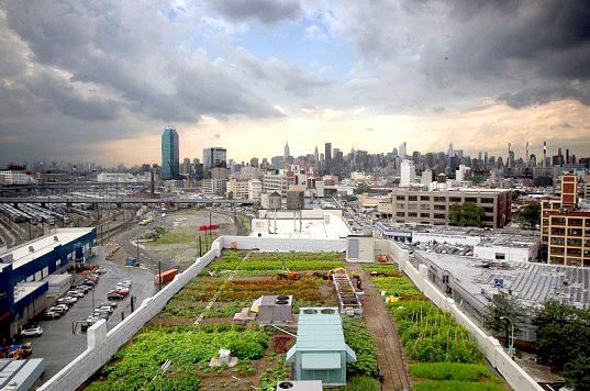Brooklyn-Grange1