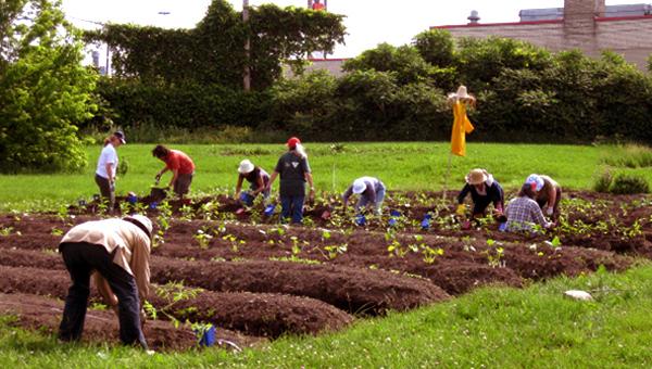 Cole d 39 t sur l 39 agriculture urbaine for L agriculture